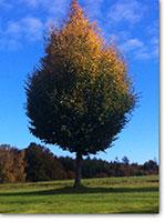 Herbst in Pähl